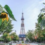 札幌の民泊届出代行、実績多数の行政書士